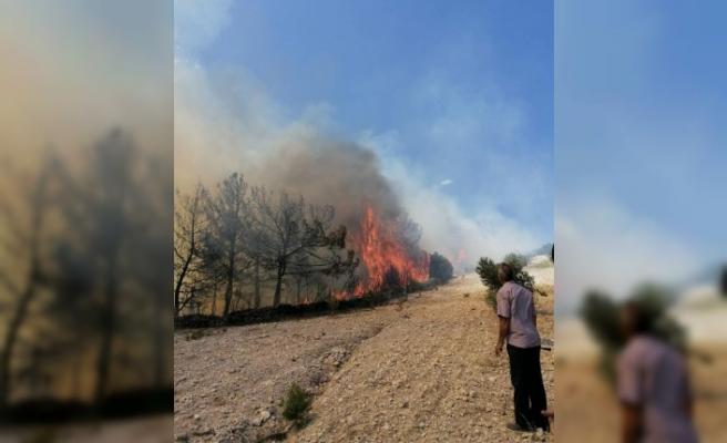 Kula'da zamanında müdahale, orman yangınının büyümesini önledi