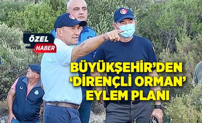 Büyükşehir'den 'dirençli orman' eylem planı