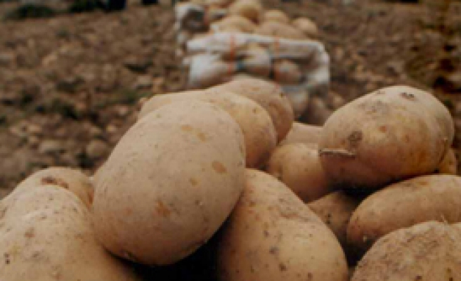 Patates Üreticisi Zor Durumda!