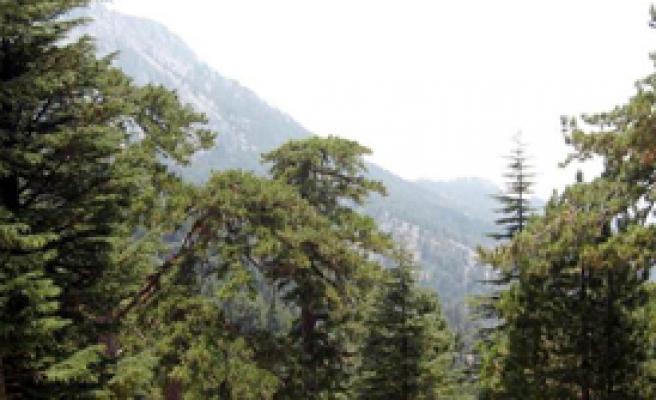 Yangına Çözüm Bulundu: Ormana Giriş Yasak!