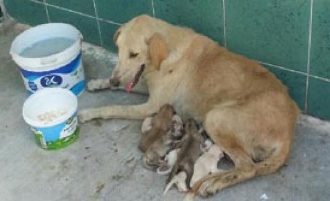 6 Yavrusu İle Yardım Bekliyor