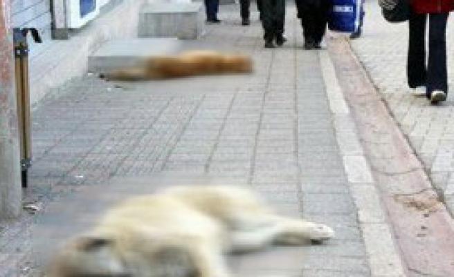 Vicdansızlar, Köpekleri Zehirledi