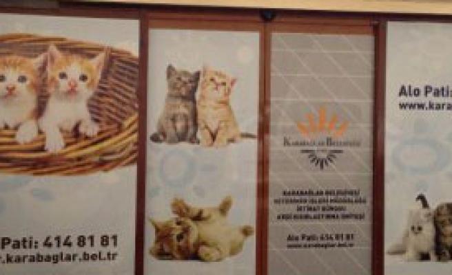 Kedi Kısırlaştırma Ünitesi