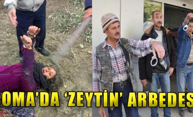 Soma'da 'Zeytin' Arbedesi