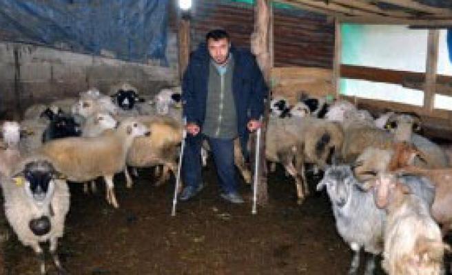 Engeline Rağmen Çobanlık Yapıyor