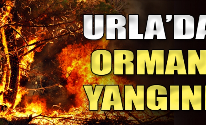 Urla'da Orman Yangını