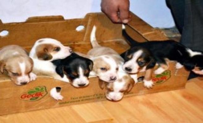 7 Yavru Köpeği Biberonla Besliyorlar