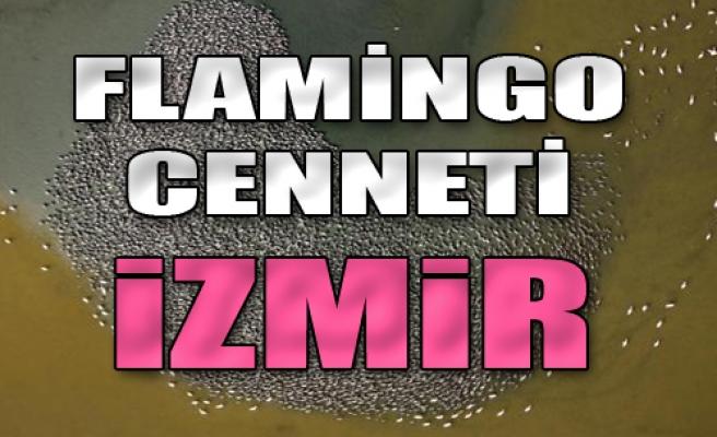 Flamingo Cenneti İzmir
