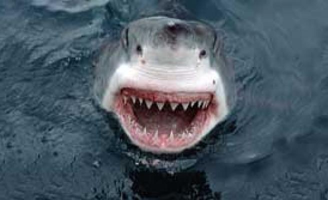 Çaydan 'Jaws' Çıktı