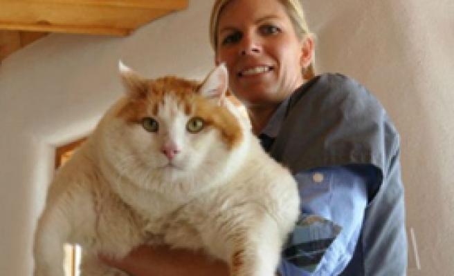 Obez Kedi Diyette Öldü