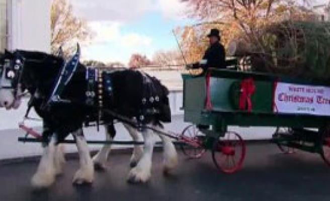 Beyaz Saray'ın Noel Ağacı Geldi