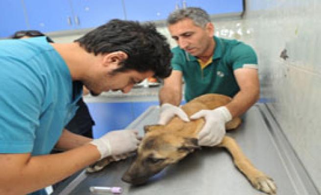 Hedef Halkı Zoonoz Hastalığından Korumak