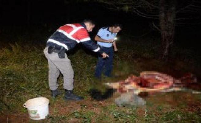 Uludağ'ın Eteklerinde At Kesimine Suçüstü