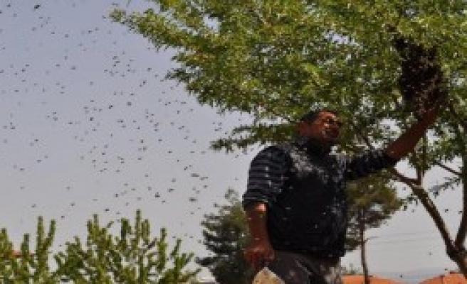 'Arıların Efendisi'