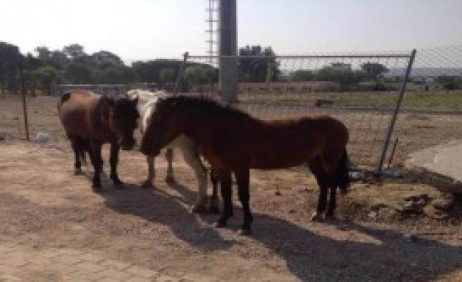 At Sahiplerine Uyarı
