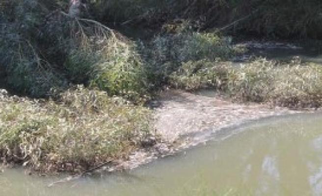 Yüzlerce Balık Sulama Kanalında Öldü