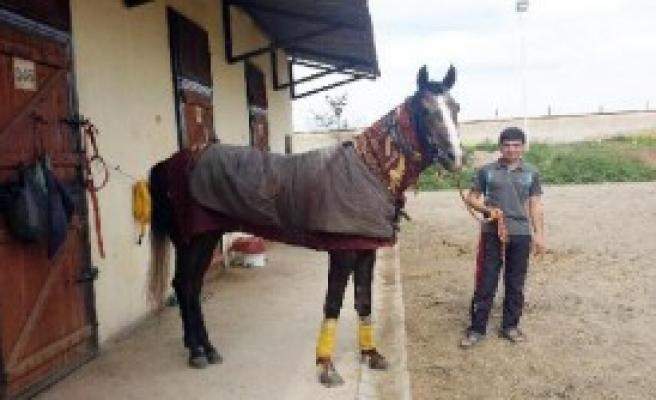 Atı Bayıltıncaya Kadar Kamçılayan Jokeye Ceza