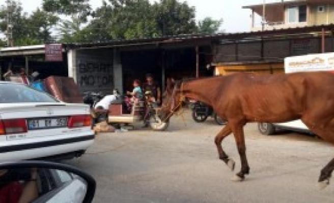 Atı Otomobile Bağlayıp Trafiğe Çıktı