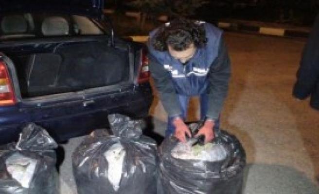 150 Kilo Esrar Ele Geçirildi