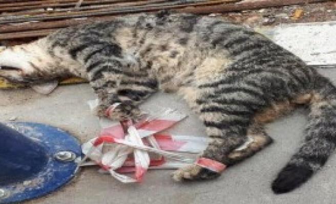 Ayakları Bağlanan Kedi Öldürüldü
