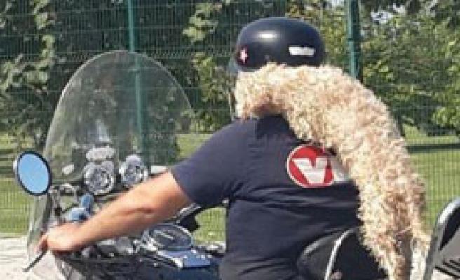 Motosiklette Köpekle Yolculuk