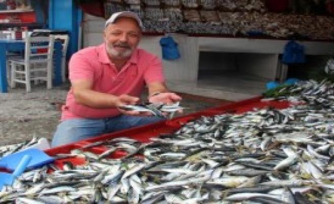 Balıkçı Tezgahlarında Uskumru Bolluğu