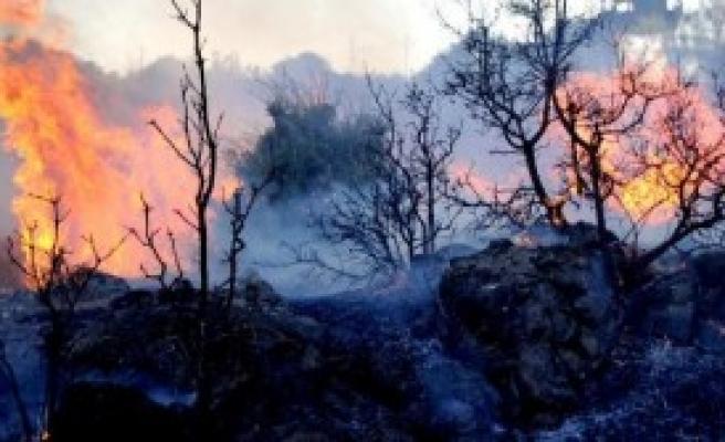 Bodrum'da Arazide Yangın