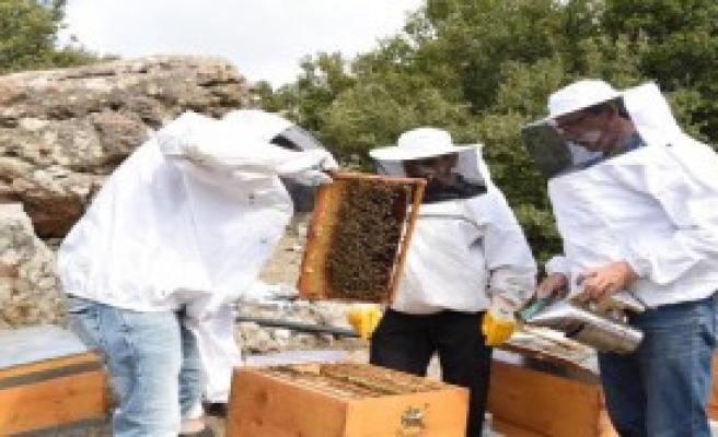 Bornova'da Bal Ormanı Kuruluyor