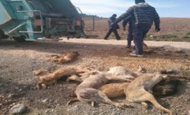 Bursa'da 84 Sokak Köpeği Zehirle Öldürüldü