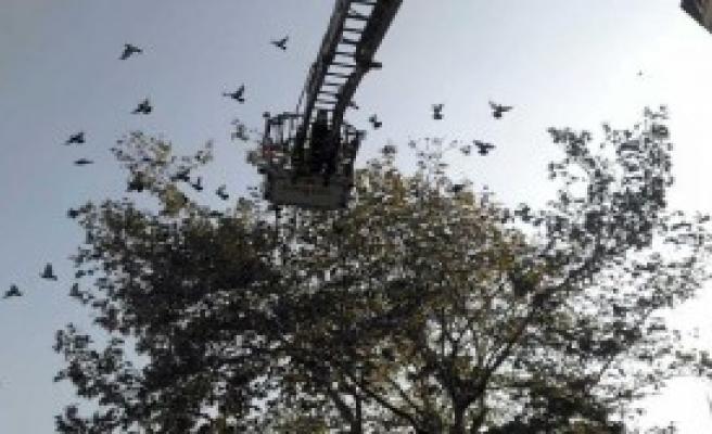 Ağaçta Güvercin Kurtarma Operasyonu