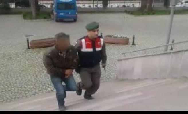 Ceviz Fidanı Hırsızları Yakalandı
