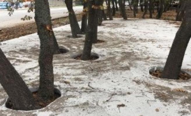 Orman Arazisindeki Betonlaşmayı Durdurdu