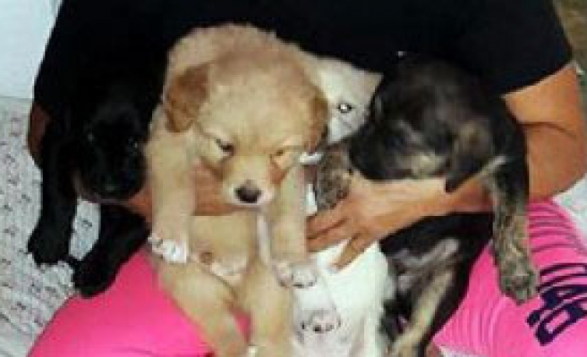 Bodrum'da Kafeste Köpek Tartışması