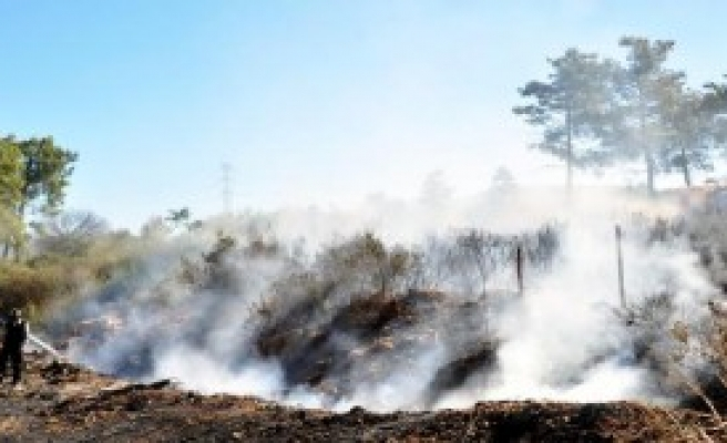 Çöp Yangını Ormana Sıçradı