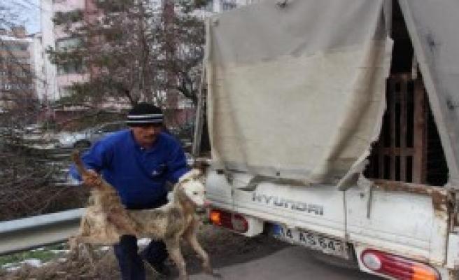 Dereye Düşen Köpeği İtfaiye Kurtardı