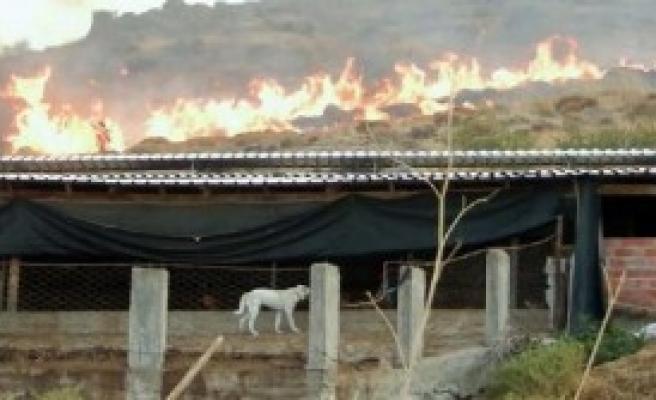 Dikili'de Korkutan Ot Yangını