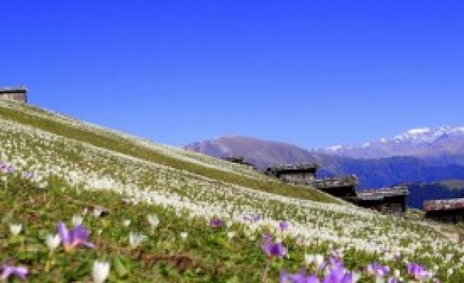 'Vargit Çiçekleri Her Yeri Beyaza Bürüdü'