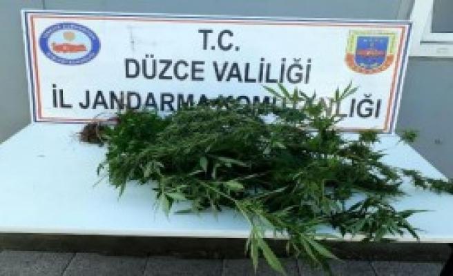 Düzce'de Uyuşturucuya 1 Gözaltı