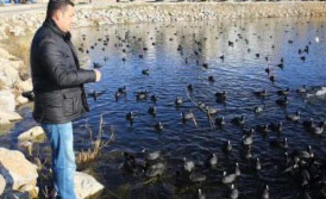 Mogan'da Aç Kalan Kuşlara Yem