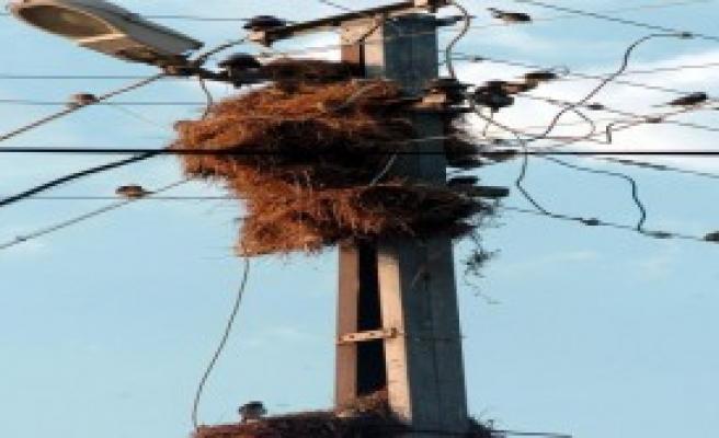 Elektrik Direği Kuşların Yuvası Oldu