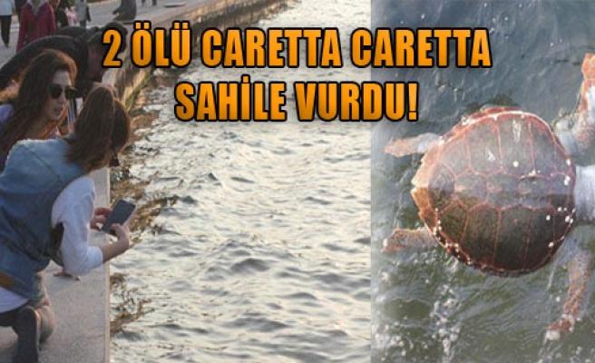 İzmir'de 2 Ölü Caretta Caretta Sahile Vurdu