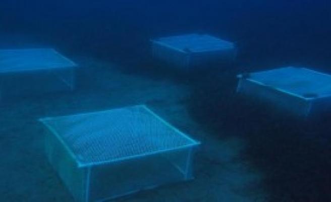 Deniz Çayırları Gözlem Altında