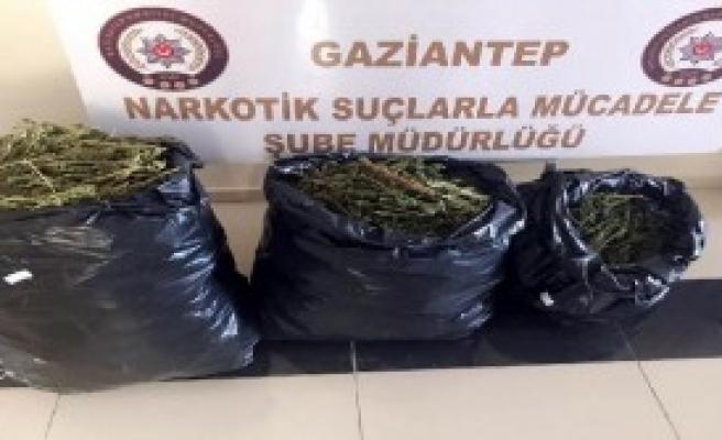 20 Kilo Esrara 2 Gözaltı