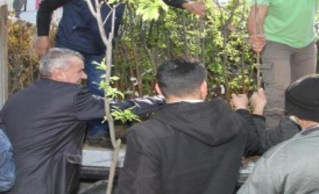 Gaziemirlilere 3 Bin Fidan