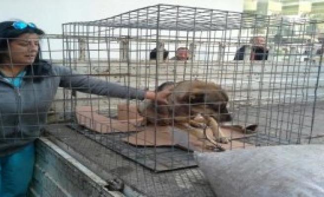 Hasta Köpeğe Hayvansever İlgisi