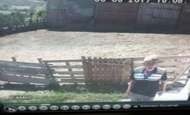 Hayvan Hırsızları Kameraya Yakalandı