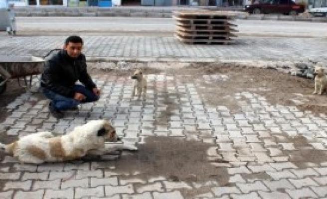 Hayvansever Taksi Şoförünün Duyarlılığı