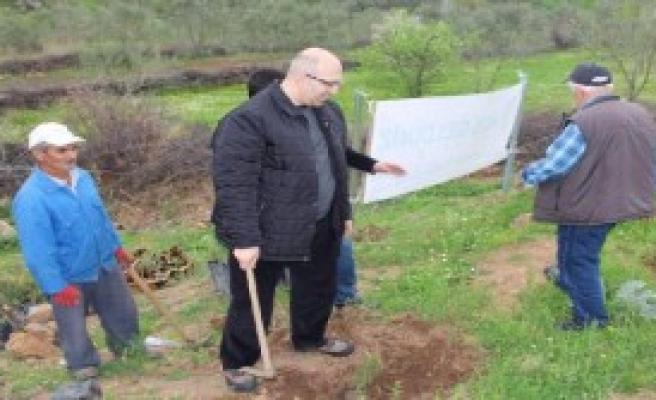 Hükümlüler Bergama'da Fidan Dikti