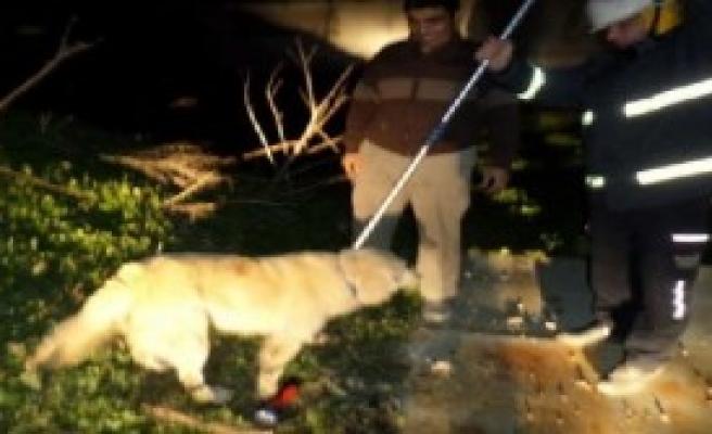 Köpeği İtfaiye Kurtardı