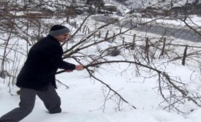 Kar Yağışı Fındık Bahçelerine Zarar Verdi